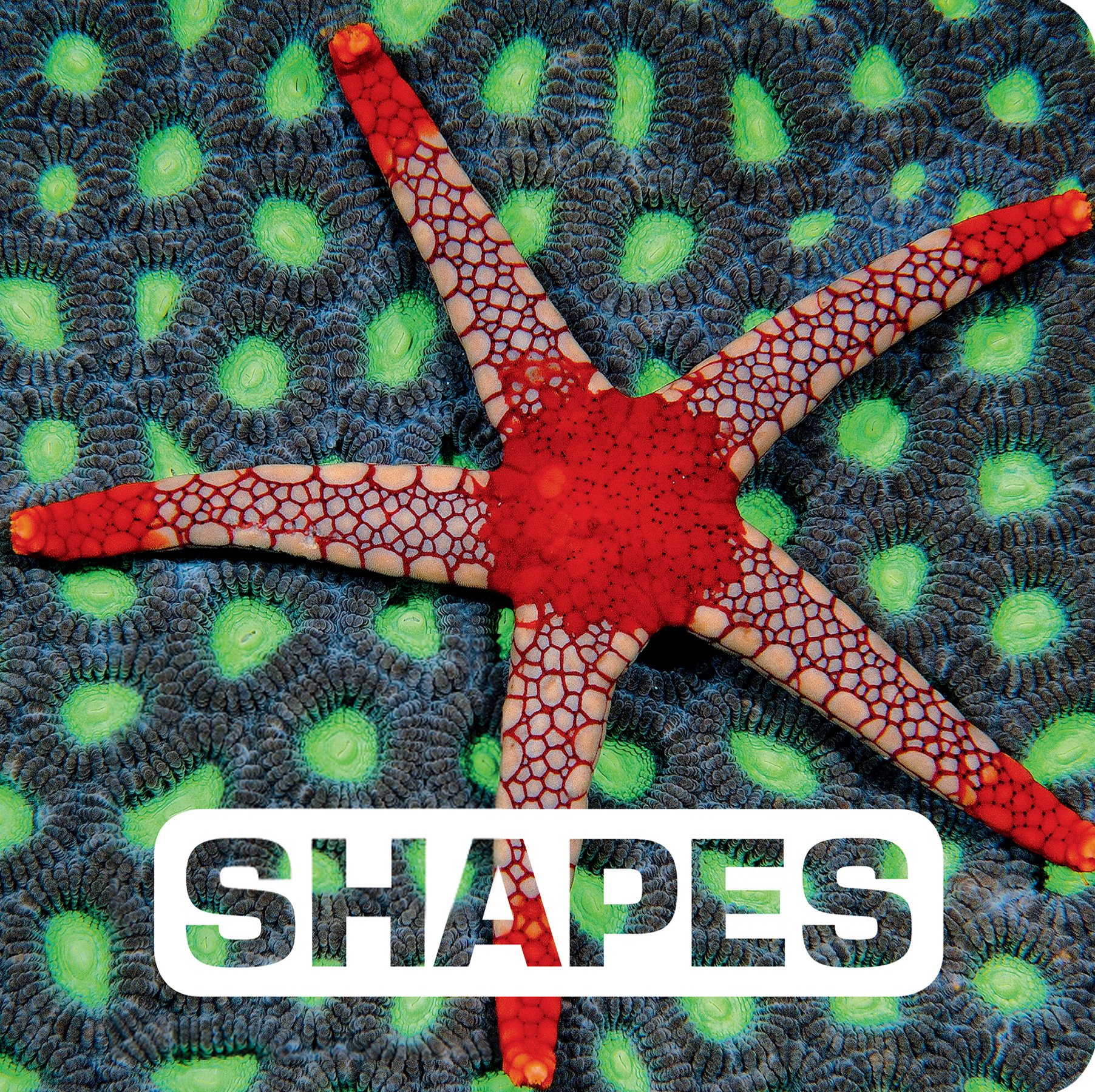 Shapes-9780544518308