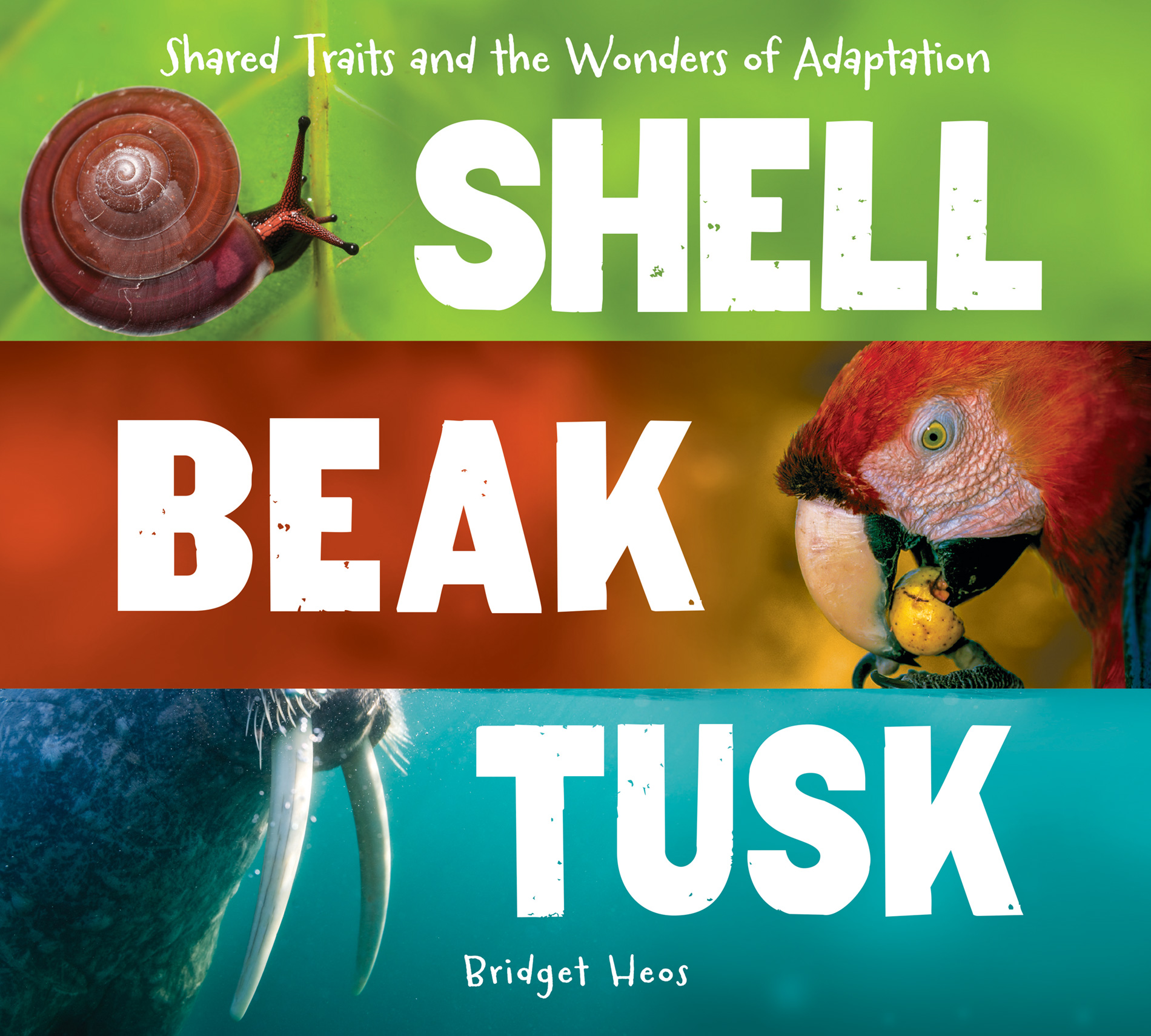 Shell, Beak, Tusk-9780544811669