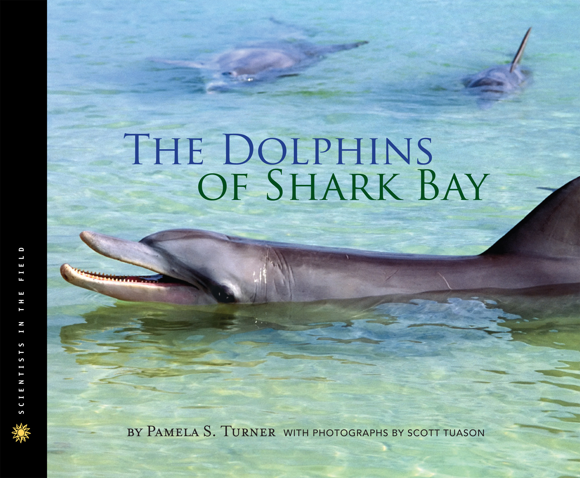The Dolphins of Shark Bay-9780547716381