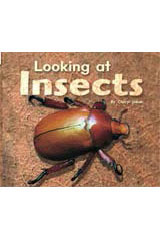 Rigby Flying Colors  Individual Student Edition Red Looking at Insects-9781418905484
